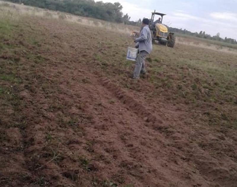 Inicia preparación de suelo y siembra de Avena Negra en el distrito de San Juan de Ñeembucu