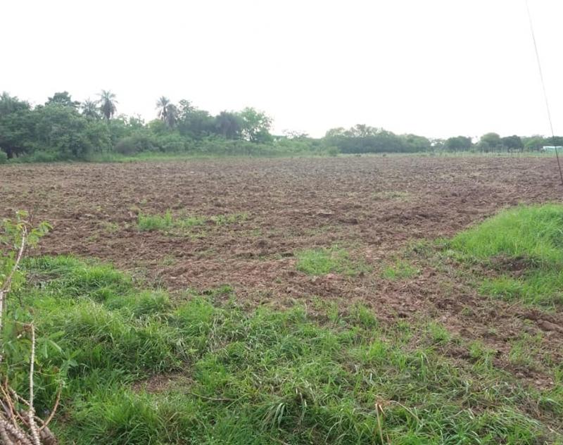 Preparación de suelo en el distrito de Alberdi, compañia Lomas